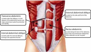 Muscoli del Core
