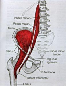 lesione muscolo ileopsoas 2