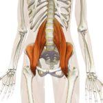 Lesione del Muscolo Ileo-Psoas: Diagnosi e Trattamento