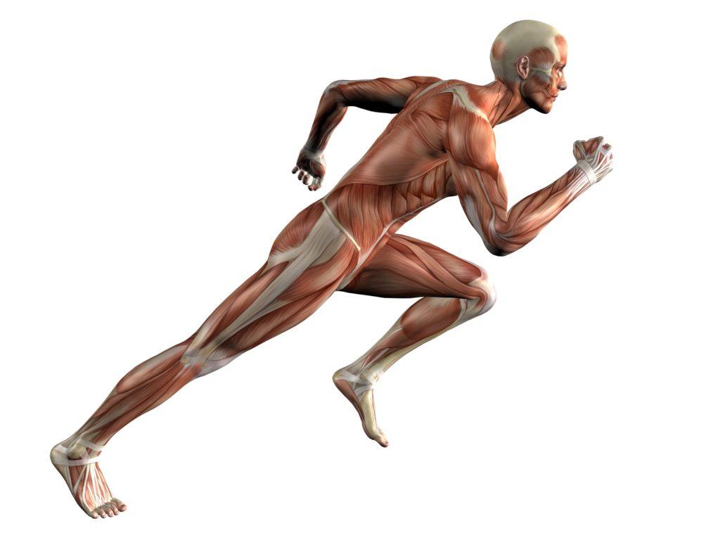 17/09/2017 - Dolore al polpaccio per un runner?